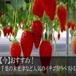 【今】おすすめ!千葉の木更津など人気のイチゴ狩りベスト3