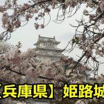 姫路城の花見のライトアップは何時まで?桜の見頃と穴場はある?