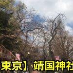 靖国神社の桜祭りの露店や出店がやっている期間と時間は?