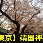靖国神社の桜の満開予想はいつ?開花時期と見ごろも知っておこう!