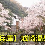 兵庫県城崎温泉の桜の見ごろと名所は?開花情報とライトアップについても!