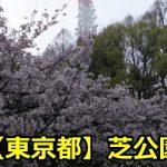 東京芝公園の桜のライトアップがヤバい?見頃と場所取りについても!