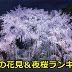 東京の花見と夜桜の穴場スポットランキングベスト3!