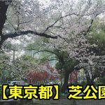 東京芝公園に花見の穴場スポットはある?場所取りや混雑時間は?