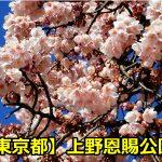 上野恩賜公園の花見のライトアップはいつまで?場所取りや混雑期間は?