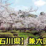 石川県兼六園の花見橋がおすすめ?花見の穴場や交通規制について!