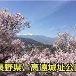 長野県高遠城址公園の花の開花・満開予想と情報は?駐車場はある?