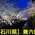 石川県兼六園の桜のライトアップはいつまで?見頃や駐車場についても!