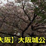 大阪城公園の桜の開花情報や予想は?駐車場や混雑期間について!