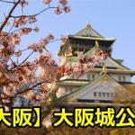 大阪城公園の花見の場所取りの穴場は?ライトアップ期間や見頃について!