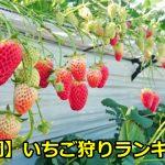 静岡のイチゴ狩りのおすすめは?おいしい人気農園ランキングベスト3