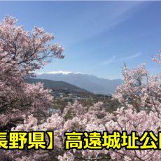 長野県高遠城址公園の花見の穴場や見頃はいつ?桜のライトアップについても!
